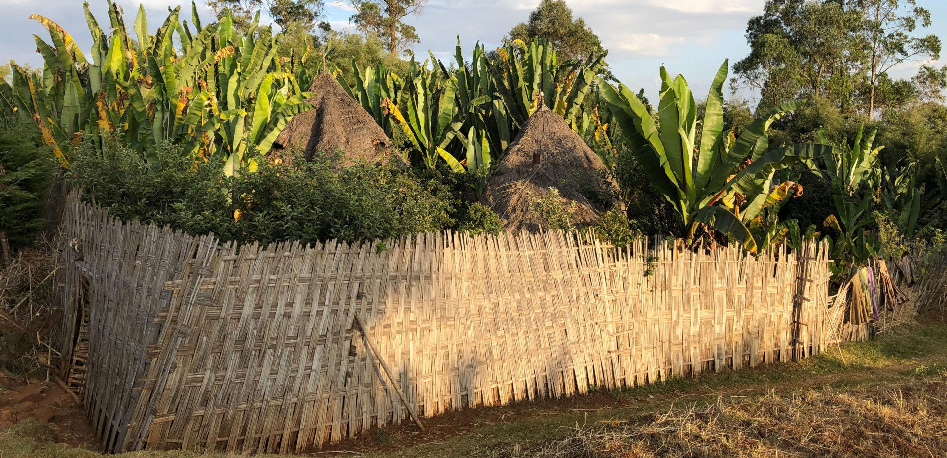 Dorze pleme – Etiopija, Omo dolina
